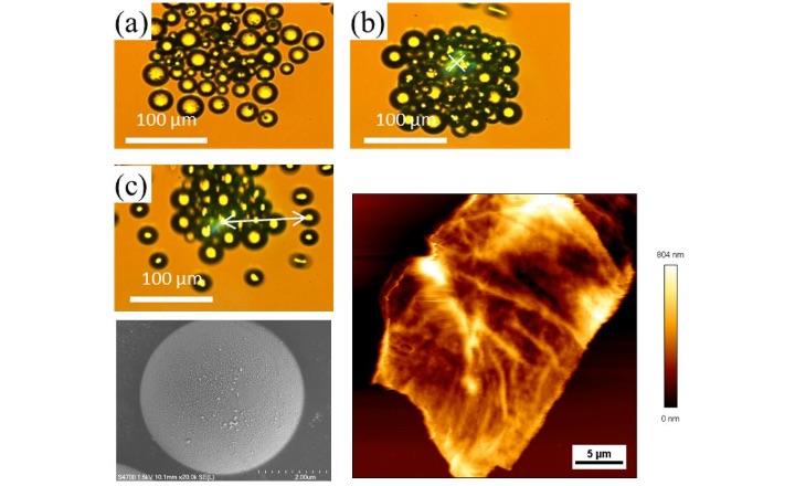 ナノ治療のための微小領域の熱制御「光ナノ治療を目指した光熱科学」